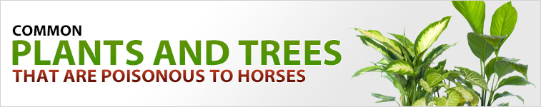 Common Plants and Trees That are Poisonous to Horses