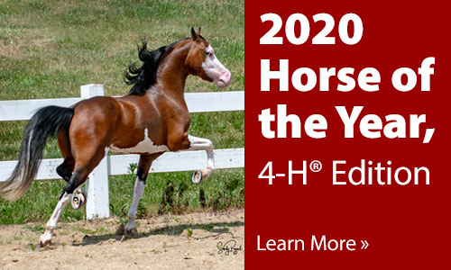 2020 Horse of the Year, 4-H Edition - Learn more